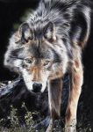 Loup/Wolf by Sadness40