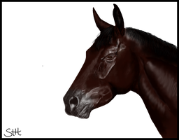 My first Horse by SurrenderToHope