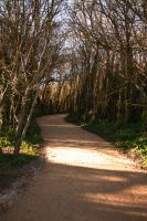 Stock Path in the forest 2 by jennsuteki