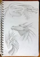Dragon Sketches by AnhuiPrincess