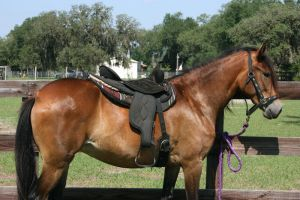 Tack Stock 2 by GloomWriter