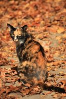 Camo for Cats by KristinaLynnPhotos