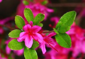 Pink and green by mkuegler