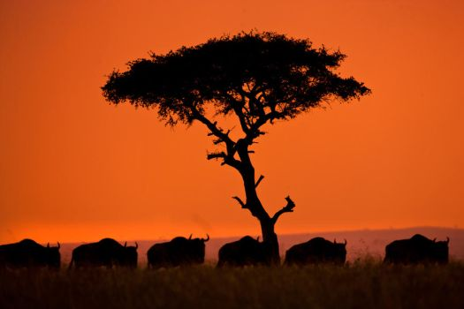 My Africa 73 by catman-suha