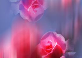 Premade Background  Roses by Flina-Stock