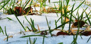 Snow and Grass by b-a88