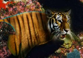Tiger Fish by PuppetMistress666
