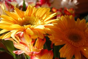 Stock 301 - Flowers by pink-stock