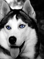 Blue eyes . by psychopathic-jad