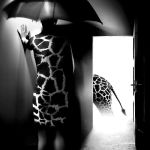 mystery with giraffe by sipsic