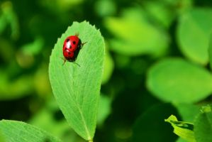 lady bug_07 by victor23081981