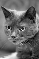 Feline Stare by Melee-pic