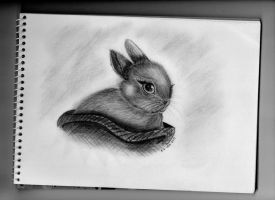 bunny rabbit by r-a-ven