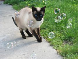 Bubble Cat by KatherineDavis