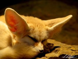 ears babe by Stratege