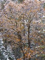 Autumn Snow II by Synaptica