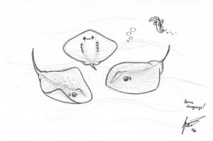 Calendar sketch 8: Stingrays by Snetri