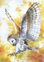 Barn Owl by siniart