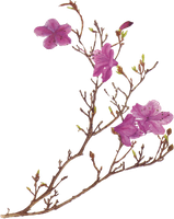Pink Flower PNG by desperatedeceit