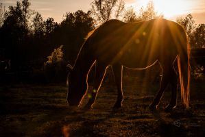 Evening Graze by cheslah