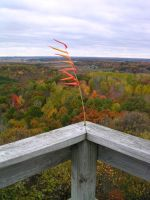 Plant on a Tower,Hoffman Hills by zeropercenthero