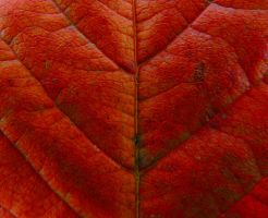 Close up of a leaf by stock1-2-3