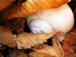 Snail Shell by grini