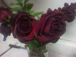 Roses 2: Different Angle (Original Version) by sinisterinsomniac