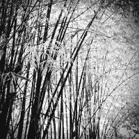 Bamboo by Menoevil