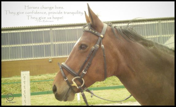 Horses change lives.... by Clayar