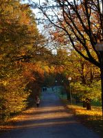 Autumn in Hagaparken, Sthlm 3 by Luddox