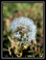 Earth Puff by lehPhotography