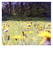 Fields of Yellow by elliotbuttons