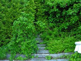 Garden stairs by digital-amphetamine