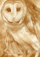 Barn Owl by Calmality