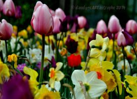 Shades Of April 21 by dandy-cARTastrophe