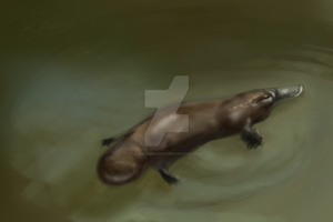 P is also for Platypus by ElysianImagery