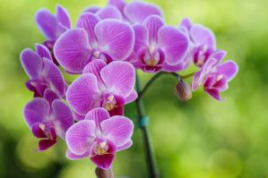 orchids by palombasso