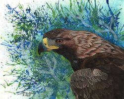 Golden Eagle splash work by Ojibway-Doko