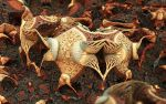 MB3D_0231_hd by 0Encrypted0
