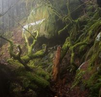 Washington State Rain Forest by mofig