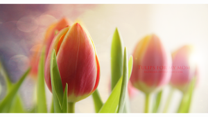 Tulips for my mom by RazielMB