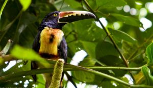 Toucan2 by JanikL