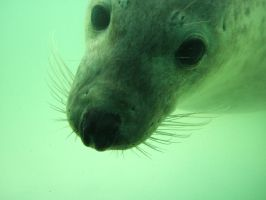 curious seal by Schlunfs