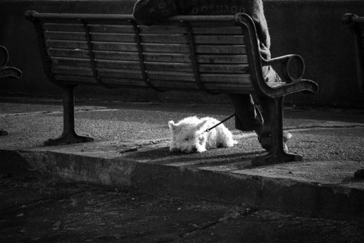 Dog under bench 2 by 30-noir