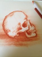 Another skull sketch by Cammo7495