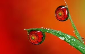 Dew Drop Refraction 25 by Alliec