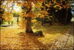 BG Autumn by Eirian-stock