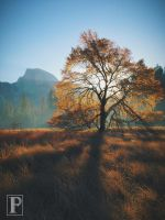 Autumn Morning, Half Dome, and an Elm Tree by JForbes1701