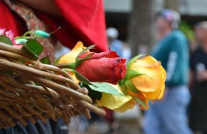 Renaissance Festival Roses by theoracleofdreams
